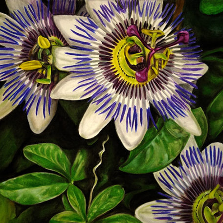 Passionflower72